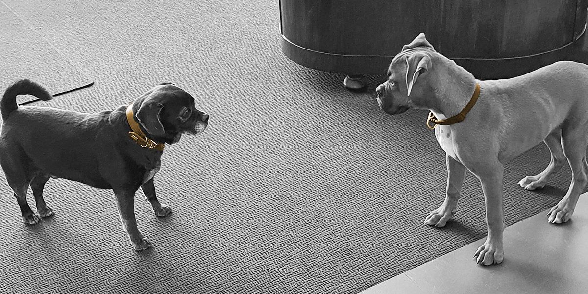 Ein Hund im Büro? Pepper und Toni schnappen nach fetter Beute
